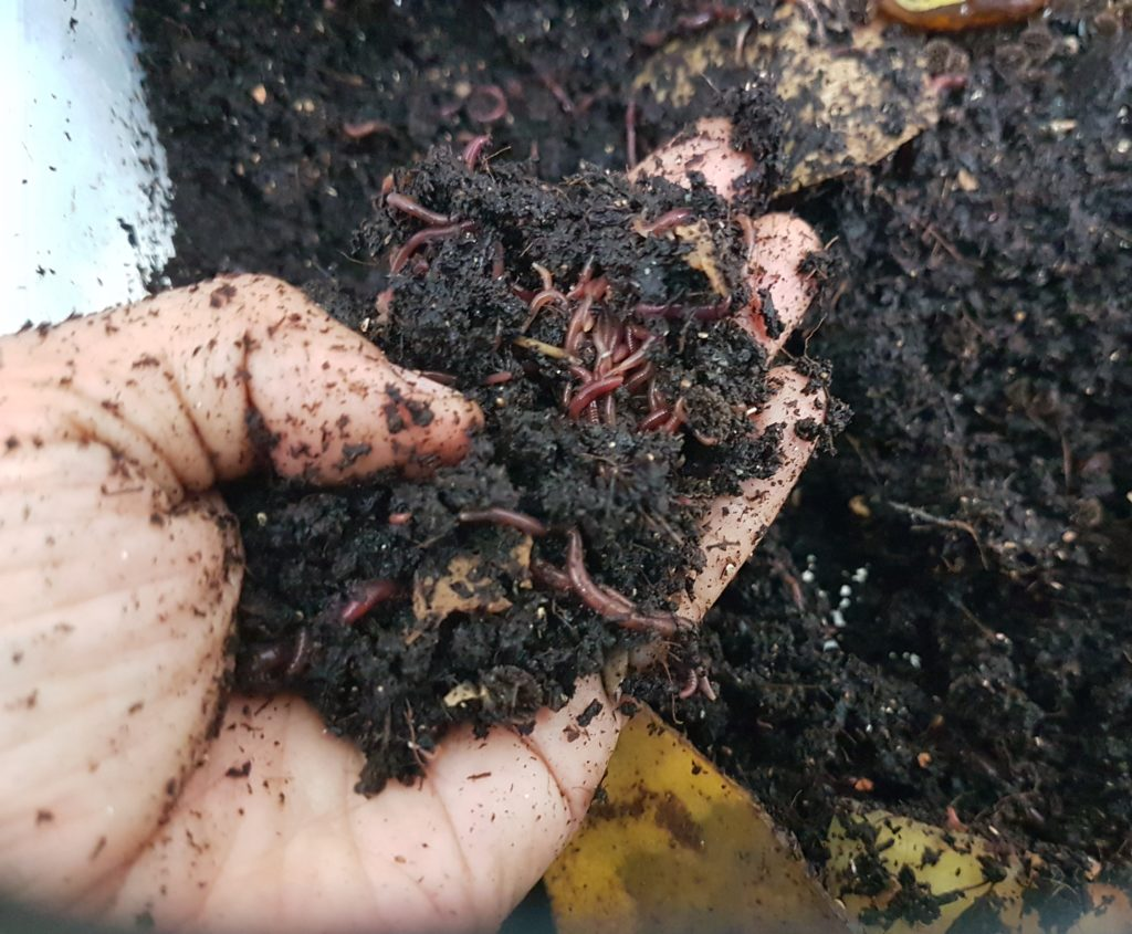 Compost foodscraps with earthworms
